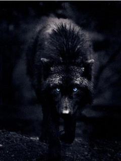 Bersniper's Characters Black-Wolf