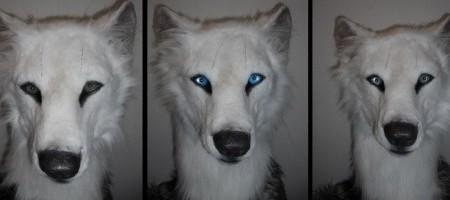 white_wolf_head